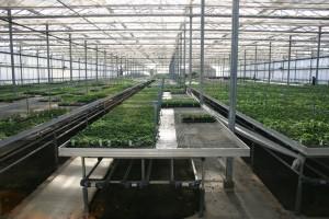 instalaciones-invernaderos-i