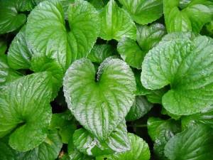 house-plant-