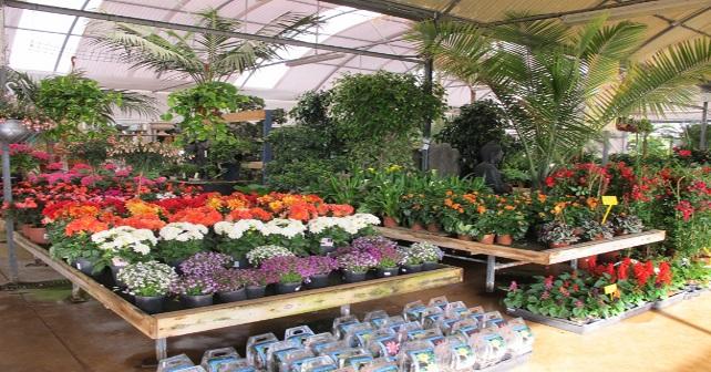 Las 10 Plantas De Interior Mas Duras Ecotonioecotonio
