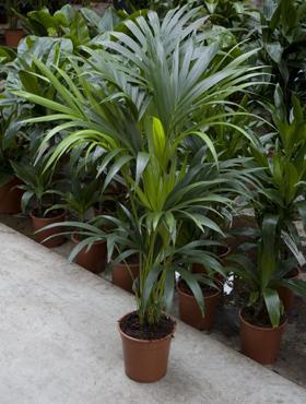 Las 10 plantas de interior mas duraderas revista for Plantas de interior duraderas