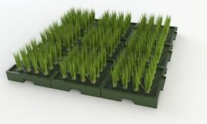 Plant-e-gran-escala