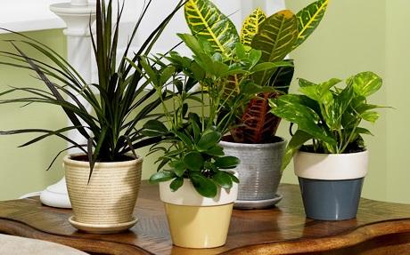 Plantas me gustan mucho pero se me mueren todas ii parte - Plantas grandes para interiores ...