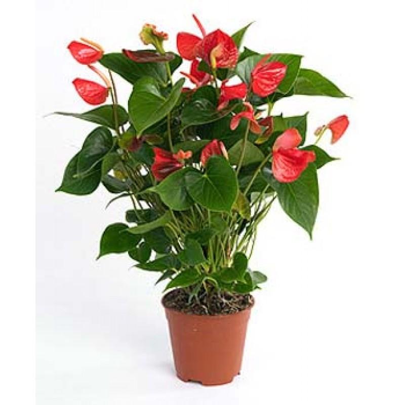 Plantas me gustan mucho pero se me mueren todas ii parte for Hierba jardin