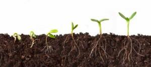 Introducción+a+la+germinación+de+las+semillas