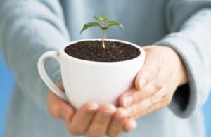 Cómo-utilizar-los-posos-del-café-en-su-jardín