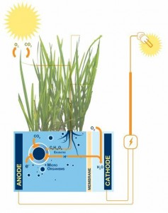Plant-e-funcionamiento