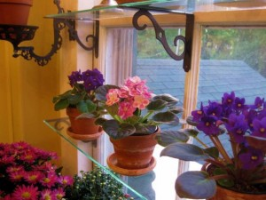 un-jardin-ventana